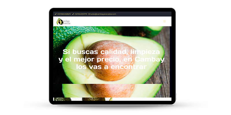 cambay avocados